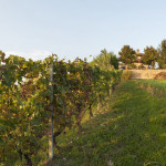 Silvia-Castagnero-winery